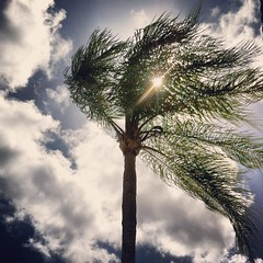 Sun Caught in Palm Tree (aftabbiam) Tags: trees sky sunshine palmtree clearskies
