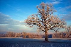 vinter (Kjell-Arne) Tags: