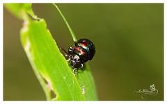 (Lee (Tinka77)) Tags: beetle colourful borderfx