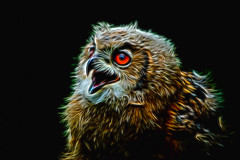 Owl chicken (PaulHoo) Tags: bird art chicken animal photoshop zoo glow fineart beak feather owl kerkrade lightroom gaiapark topazlabs