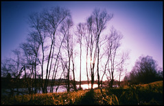 trees and river # 1 (Roberto Messina photography) Tags: italy color film nature analog xpro crossprocessed january pinhole analogue zeroimage asti zero69 2015 fujivelvia100f