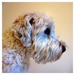 Profile (Eric.Ray) Tags: dog beautiful digital canon project square point photo shoot daily format doghouse challenge doglovers 187365