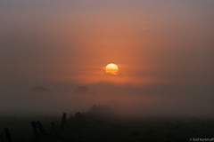 Glowing Fog (ralf.kerkhoff) Tags: nebel sommer jahreszeit natur himmel sonne sonnenaufgang heubach mariaveen reken heubachwiesen