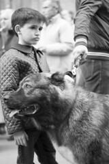 Amigo fiel (Vicente Almodvar) Tags: perro animales nio