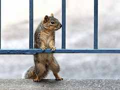 15-03-14_027 (slee1955) Tags: canon squirrel mark iii 5d mm slee 70300 f4l