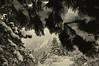 Look Ahead (Patrick.Russell) Tags: winter snow fog nikon colorado framed boulder tokina co flatirons chautauqua d300 1116