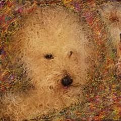 昨日お絵描きしました、久しぶりにペットスマイルのお友達のワンちゃんで、トイプードルのメリーちゃんです。  【K】 『桜色舞うころ』 弾き語り (cover) 中島美嘉 http://youtu.be/_XdOHGplhcU