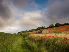 Pednor Poppies (Damian_Ward) Tags: red barn rural photography countryside buckinghamshire poppy poppies chesham pendor damianward damianward