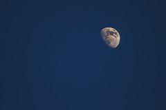 Buck Moon Growing (rmehdee) Tags: moon luna buckmoon buck sky blue daymoon day bluemoon canon