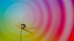 Gold Drop (spirale) (Yasmine Hens) Tags: gold drop goutte spirale coulour color couleur ngc hensyasmine hens yasmine flickrunitedaward namur iamflickr world100f flickr belgium wallonie europa rainbow fabuleuse