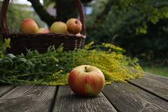 ckuchem-2071 (christine_kuchem) Tags: tisch korb deko dekoration apfelernte naturgarten herbstgarten