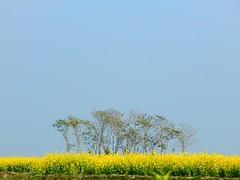 Beauty of Nature. Bangladesh (Shafi Uddin1) Tags: lnna trees beautifulbangladesh nature beautyofnature sky sylhet sunamganj asia ngc supershot nikon nikkor nikonlens bangladesh luigi marcospararas peter christopher oliver