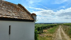 Weinbergshuschen bei Selzen (Frank Hamm) Tags: wandern rheinhessen weinberge hahnheim selzen