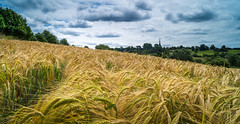 Natural Layers (dolbinator1000) Tags: land scape tardebigge bromsgrove worcestershire england farm farming farms sky cloud clouds cloudy church horizon summer barley crop crops tree trees yellow green blue pano panorama panoramic