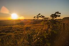 Sunset 18/07/2016 (Tim Linkin (Hashtag Media UK)) Tags: uk blue trees sunset sky orange sun green colors grass landscape kent nikon warm colours bright dusk thistle signpost folkestone happyplace nikond90 nikonuk