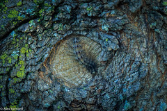 Petit camouflage (alex.bernard) Tags: chenille caterpillar insecte insect animal nature faune fauna camouflage érable maple été summer canon canon5diii 5d sigma sigma70200mm 70200mm macro outdoor montsainthilaire québec canada
