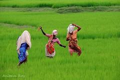 Dancing (anitavaroy) Tags: rural landscape village travel field paddyfirld people green life women dancing balance
