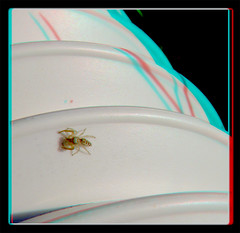 The Itsy Bitsy Spider Climbed Up The Water Spout . . . - Anaglyph 3D (DarkOnus) Tags: pennsylvania buckscounty panasonic lumix dmcfz35 3d stereogram stereography stereo darkonus closeup macro arachnid itsy bitsy spider water spout climbed up jumping anaglyph