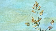the poetry of simplicity (Adrinne - for a peace-loving world! -) Tags: poetry simplicity grass panasonicfz150 adrinne addyvanrooij 2lilowls speckled macro small details garden textured