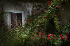 sleaping beauty (Ralph Oechsle) Tags: dornrschen mrchen brdergrimm old house oldhouse hut flash strobe austria sterreich mhlviertel fairytale rosen