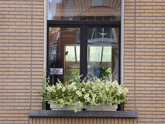 Beautiful windowbox (seikinsou) Tags: brussels belgium bruxelles belgique summer windowbox flowerpot yellow flower window reflection