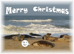 Wishing You All A Merry Christmas (mr_snipsnap) Tags: christmas beach festive grey holidays it card take seals greetings easy merry