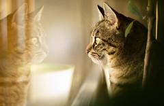 Mia (ruhrmad) Tags: cat canon mia katze spiegelbild 60d