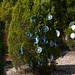 Trees_of_Loop_360_2014_068