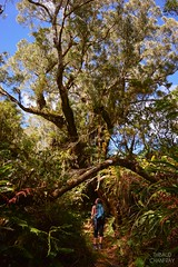 Contemplation (Thibaud Chanfray) Tags: portrait tree nature reunion forest portraits island ngc ile arbre runion fort tamarin le sauvage forts