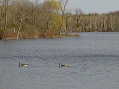 Lucas Lake Spring 027