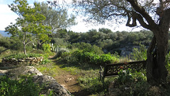 Winter is green (Marlis1) Tags: olivetrees finca olivenbäume marlis1 tortosacataluñaespaña canong15 exploredec142014