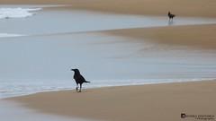 A Crow's Journey