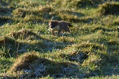 Soat (jazalty) Tags: nature wildlife yorkshire reserve trust mustelid yorkshirewildlifetrust staveley staveleynaturereserve