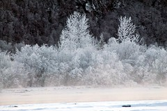 Ice (Willie Kalfsbeek) Tags: trees winter mist snow cold ice alaska forest ak willie kalfsbeek