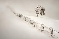 Zagua (Kinto Real) (arbioi) Tags: nieve euskalherria pyrenees navarra pirineo gr11 okoro nafarroa baztan artesiaga urkiaga enekorri