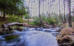 Is this winter? (Anders Toomus) Tags: sweden mets rootsi jonsered tonemapped jögi canon7d foreststrem lovedslr