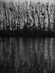 Untitled (michelle@c) Tags: bw black texture drawing country explore 3200iso lineoftrees vexin borddeseine bankoftheseine michellecourteau paysageàlencrenoire lanscapeintheblackink landschaftinschwarzertinte