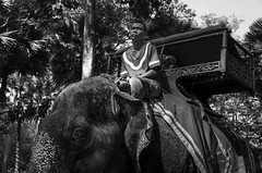 Cambodia: Elephant driver (Broogland - Nicolas Gudon) Tags: voyage camera trip travel blackandwhite bw animal temple asia cambodge cambodia tour place noiretblanc pentax country experiment nb unesco flux technical asie practice siemreap technique pays essai k5 lense appareil workflow merveille objectif exprience angkorvat hindou lieu bouddhiste vishnou tamron1750 suryavarmanii santuaire khmre montmeru templemontagne prasatangkorvat