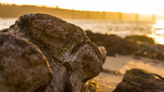 (gavmroberts1984) Tags: sunset sea beach water canon scotland log rocks edinburgh south queensferry diftwood 700d firthoftheforth