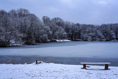 Icy blue (TanzPanorama) Tags: blue trees winter lake snow ice nature water landscape grey scenery frost cloudy poland warsaw waterscape sonynex5n