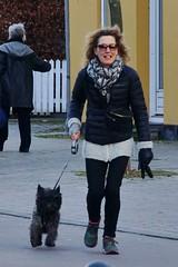 Fast over the street (osto) Tags: dog pet animal denmark europa europe sony terrier zealand otto scandinavia danmark cairnterrier slt a77 sjlland osto alpha77 osto february2015