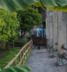 Garden of San Daniele Comboni, Limone sul Garda (GardenTraveller) Tags: italy black fauna cat garden san garda pavement missionary limone sul daniele missionari comboni comboniani