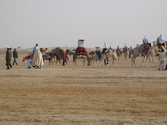 The Procession of Tunisian Marriage Camels