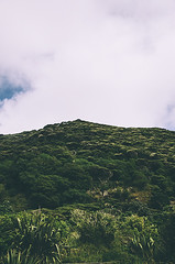 Tree Canopy (DeepLovePhotography) Tags: newzealand karekarebeach deeplovephotography seanhelmn
