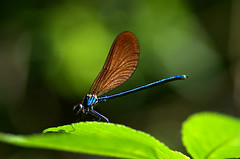 Libe4 (bidueiro) Tags: naturaleza insectos macro macrofotografa