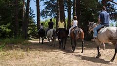 5D_IMG_6548 (Jeroen Kransen) Tags: bulgarije bulgaria    horse horseback equestrian horseriding paardrijden paardrit rodopen rhodopes