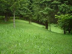 around Tureck (jakubfilo) Tags: trees summer nature slovensko slovakia priroda forests leto velka stromy banska wiews bystrica fatra turecka lesy vyhlady