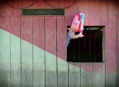 Amazon Mermaid (Dave_Davies) Tags: house building home peru window amazon village little balloon culture disney clash helium jungle mermaid amazons