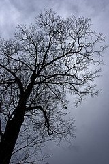 Haunting (dm4n) Tags: singapore queenstown tree overcast dark dead foreboding deciduous cloudy leafless bare shape shadow branch