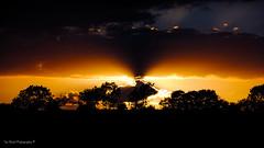 DSC_0163 (timmie_winch) Tags: nikon nikond3000 d3000 august august2016 2016 sun sunset sunsetsuffolk sunsetoversuffolkcountryside sunsetovercornfields sunsetovercornfield silhouette 18105mm 18105vr nikon18105mmvrlens shadows golden goldenhour goldenlight elliedunn ellie eleanordunn ells eleanor ellsdunn dunn landscape landscapephotography landscapephotographer naturephotographer naturephotography nature timwinchphotography tim timwinch winch debenham ip14 suffolk